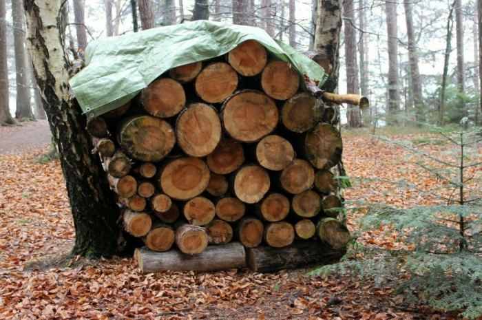 дровница без навеса между деревьями